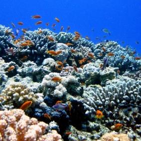 Mar Rosso (10)