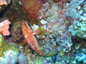 Mar Rosso (116)