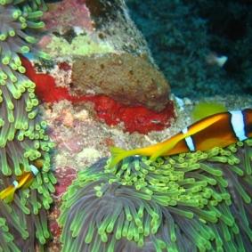 Mar Rosso (123)
