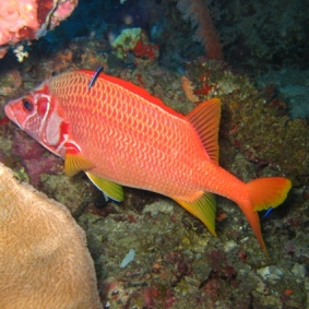 Mar Rosso (131)