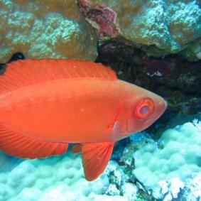 Mar Rosso (148)
