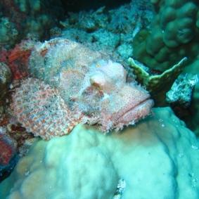 Mar Rosso (150)