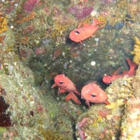 Mar Rosso (155)
