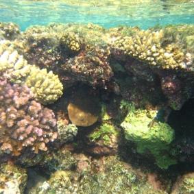 Mar Rosso (162)