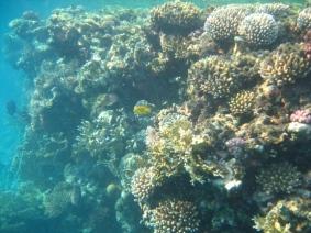 Mar Rosso (163)