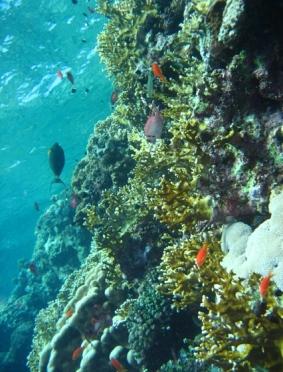 Mar Rosso (175)
