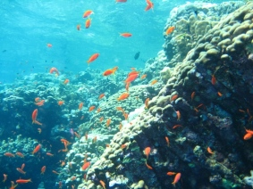 Mar Rosso (176)