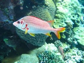 Mar Rosso (177)