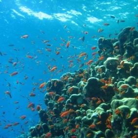 Mar Rosso (178)