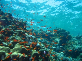 Mar Rosso (179)