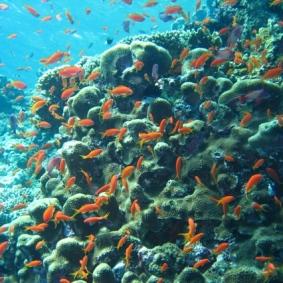 Mar Rosso (180)