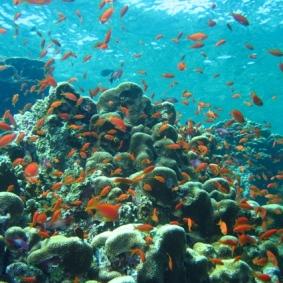 Mar Rosso (181)