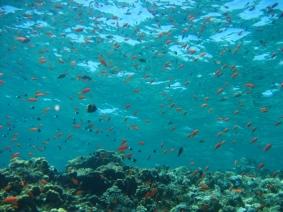 Mar Rosso (182)