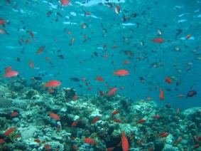 Mar Rosso (183)