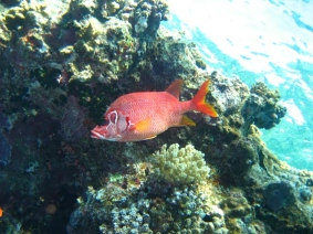 Mar Rosso (184)