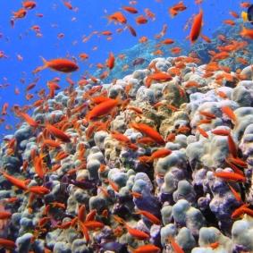 Mar Rosso (33)