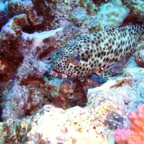 Mar Rosso (4)