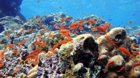 Mar Rosso (44)