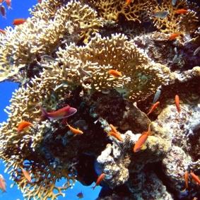 Mar Rosso (57)