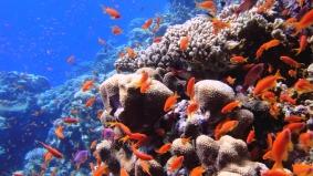 Mar Rosso (58)