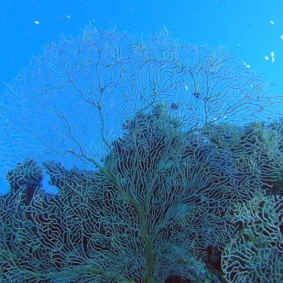 Mar Rosso (8)