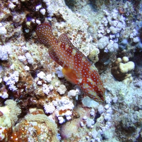 Mar Rosso (9)